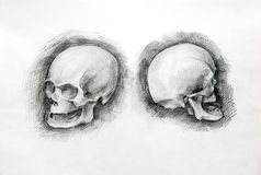 Skull study drawing. Pencil on paper. Royalty Free Stock Images