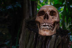 The skull on stump in the wood Royalty Free Stock Photography
