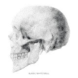 Skull 01 Stock Photography