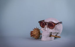 Skull with sunglasses and thistles in his teeth Royalty Free Stock Photography