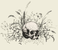 Skull surrounded by a field of grass. Royalty Free Stock Photo