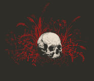 Skull surrounded by a field of grass. Stock Photography