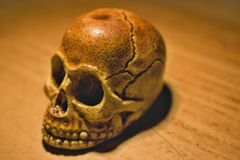 Skull. On the table. Desktop wallpaper. Model royalty free stock photo