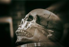 Skull on a table stock photo