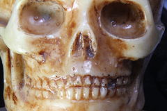 Skull with teeth and eye orbits Stock Photography