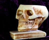 Skull with teeth and eye orbits Royalty Free Stock Photo