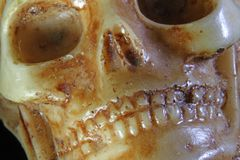 Skull with teeth and eye orbits Royalty Free Stock Photography