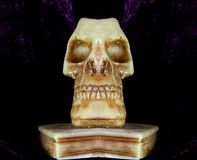 Skull with teeth and eye orbits Stock Photos