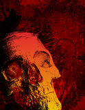 Skull and texture, portrait Stock Photography