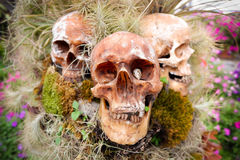 Skull. Three skull plant cover in the garden royalty free stock photo