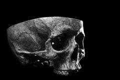 Skull three quarter view. Cut skull for an autopsy Royalty Free Stock Image