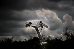 Skull totem Royalty Free Stock Image