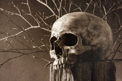 Skull on tree stump in sepia Royalty Free Stock Image