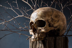 Skull on tree stump Stock Photo