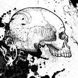 Skull vector. Skull and grunge background vector Royalty Free Stock Photo