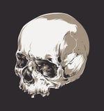 Skull Vector Art Stock Photos