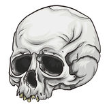 Skull Vector Royalty Free Stock Photo