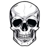 Skull Vector. Human Skull Bone Vector Illustrations Royalty Free Stock Photo