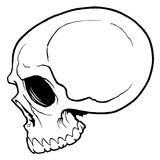 Skull vector Stock Photo