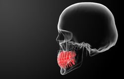 Skull with visible red teeth Royalty Free Stock Image