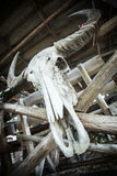 Skull of a water buffalo on a wooden fence Royalty Free Stock Images