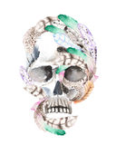 Skull with watercolor feathers illustration Royalty Free Stock Photos