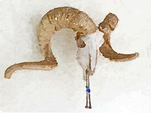 Skull. Watercolor painting of bighorn sheep skull with native decoration Royalty Free Stock Photography