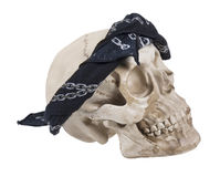 Skull Wearing a Black Bandana Royalty Free Stock Photos