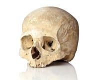 Skull on white Royalty Free Stock Image
