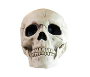 Skull on a white background. Skull isolated on a white background Royalty Free Stock Photos