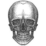 Skull on a white background. sketch Stock Images