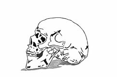 Skull on white background Royalty Free Stock Images