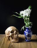 Skull and white flower in blue vase still life on wood board Royalty Free Stock Photography