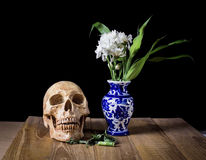 Skull and white flower in blue vase still life on wood board Royalty Free Stock Photos