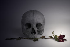 Skull and withered Rose Royalty Free Stock Photo