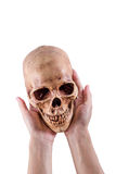 Skull. Women hand hole a Skull on Isolated white background, with Clipping Path Stock Photos