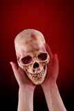 Skull. Women hand hole a Skull on red background, with Clipping Path Royalty Free Stock Photo