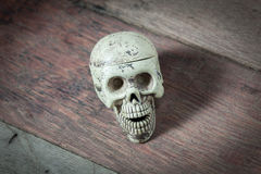 Skull on wood background. Stock Photography
