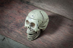 Skull on the wood background. Stock Images