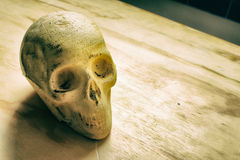 Skull on a wood table Stock Photography