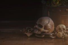 Skull on wooden of dust. Stock Images