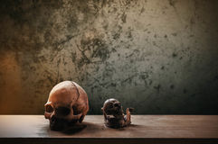 Skull on the wooden Royalty Free Stock Images