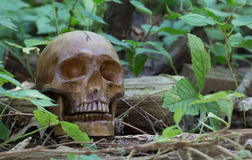 Skull in the Woods Royalty Free Stock Photos