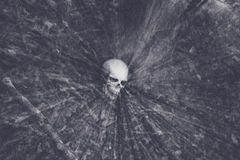 Skull in Woods Royalty Free Stock Image
