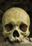 Skull of a young man Royalty Free Stock Images