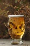 Skullkrysantemum Arkivbilder