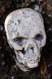 Skulll humain dans le temple Images libres de droits
