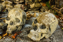 Skulll humano en el templo imagen de archivo