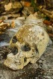 Skulll humano en el templo imágenes de archivo libres de regalías