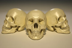 Skulls Stock Photos